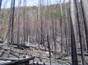 The aftermath of the fire (2007).