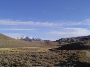 Antone view