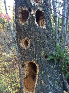 Got woodpeckers?