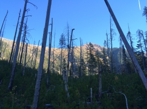 A few fires have moved through the area the past few years. It was awesome to see all the new trees growing.